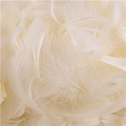 Ivory Decorative Feathers - 50g