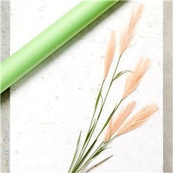 Beige Pink Pampas Grass Decoration - 1.45m